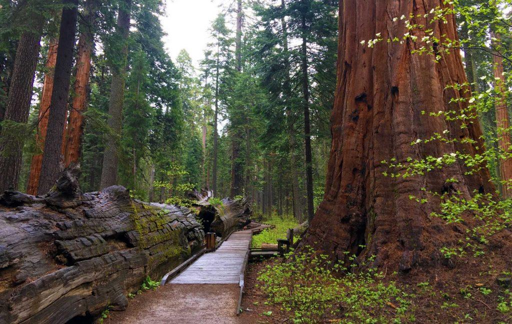 Calaveras Big Trees State Park | Lisa Boulton