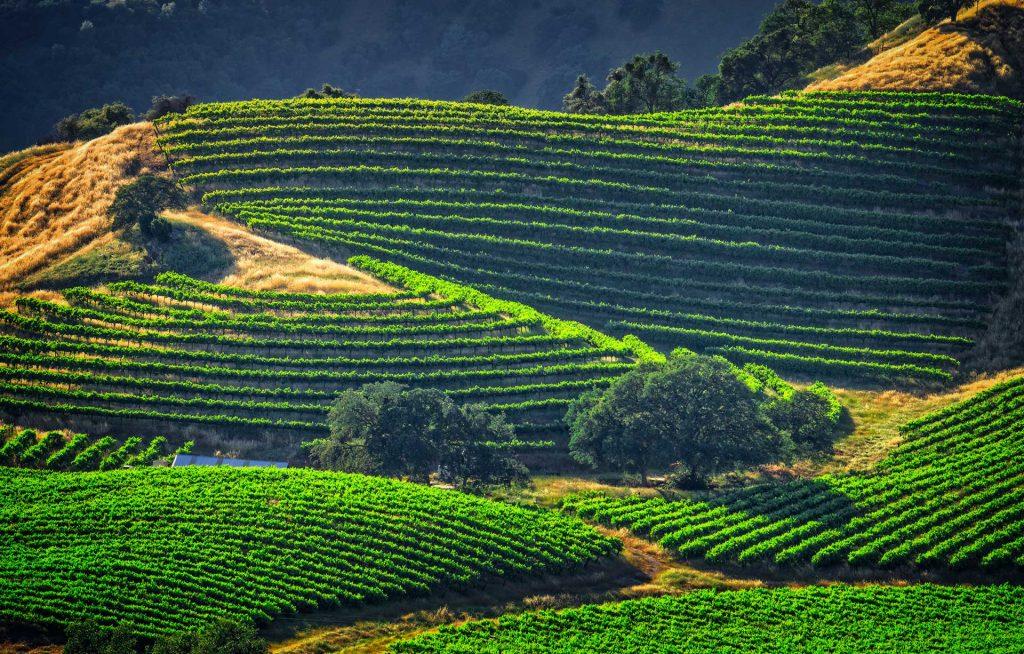 Gold Country | Calaveras wine